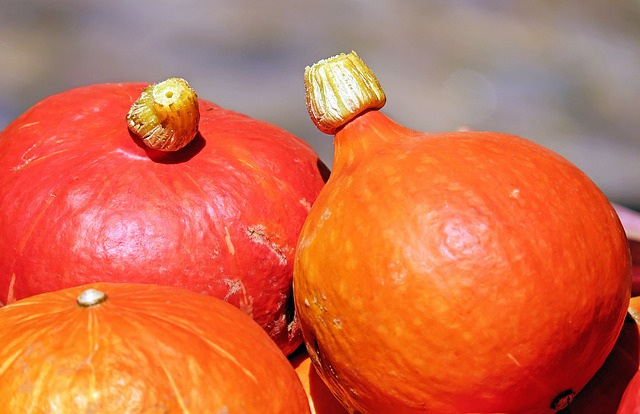 pumpkin-1595644_640