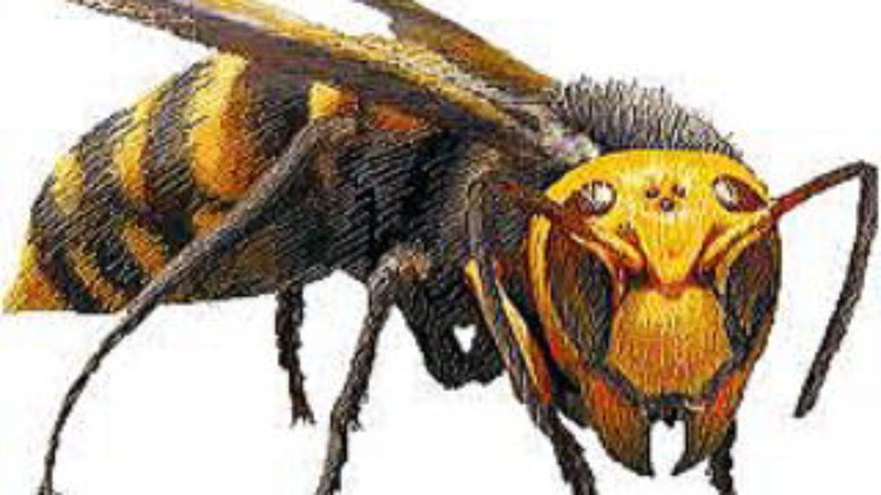 た 蜂 行く 刺され に べき 病院